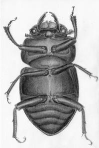 The Beetles1