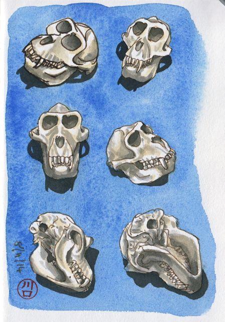 skulls etc6