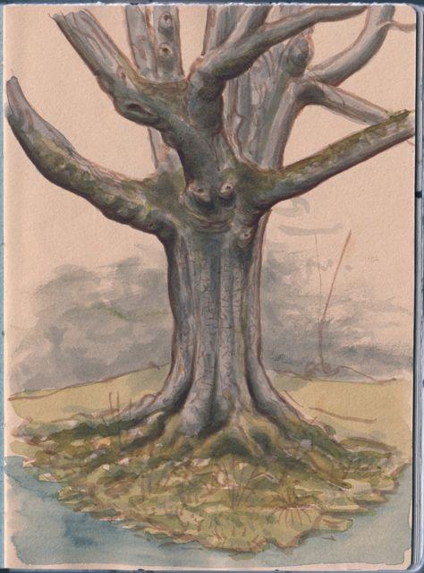 magnolias341